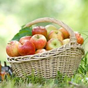 Apfelkuchen-Picknick klein